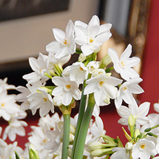 Narcis Ziva