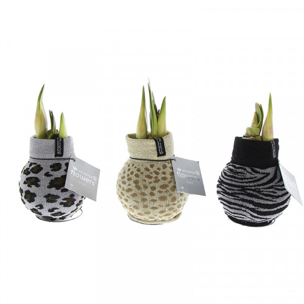 Waxed Amaryllis Animal Print set of 3