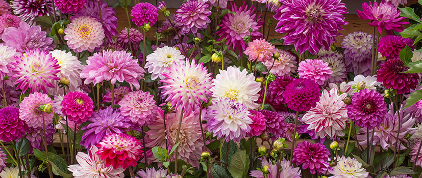 Summer Flowering Collections
